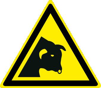 Pericolo toro
